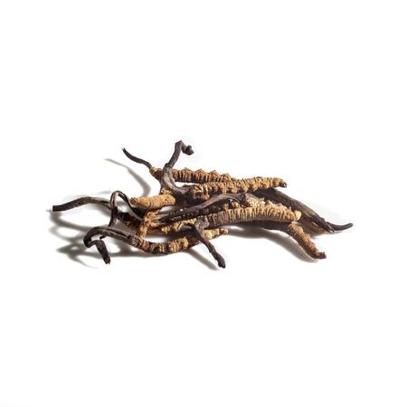 Herbal Medicine: Cordyceps sinensis