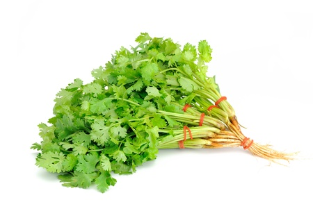Herbal Medicine: Coriander