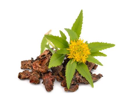 Herbal Medicine: Golden Root
