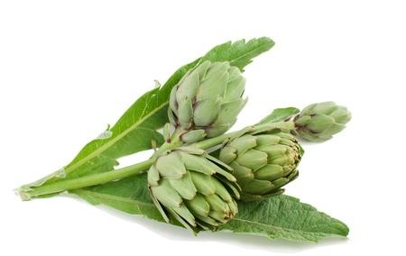Herbal Medicine: Artichoke