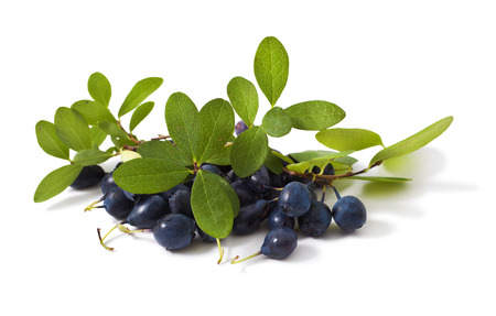 Herbal Medicine: Bilberry