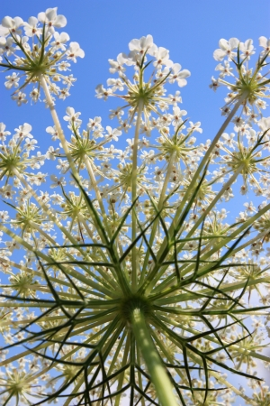 Herbal Medicine: Cumin