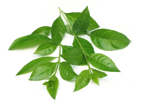 Herbal Medicine: Henna