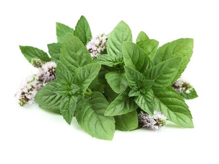 Herbal Medicine: Mint