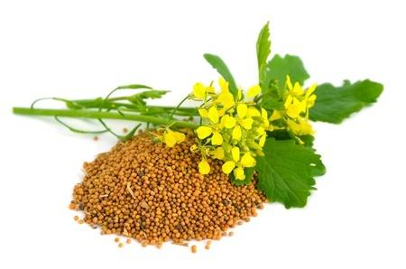 Herbal Medicine: Mustard