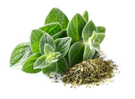 Herbal Medicine: Oregano