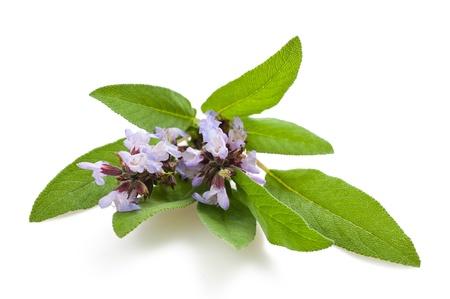 Herbal Medicine: Sage