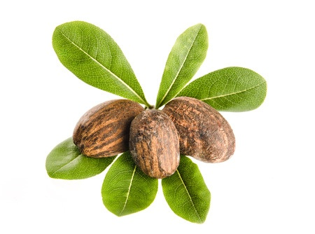 Herbal Medicine: Shea