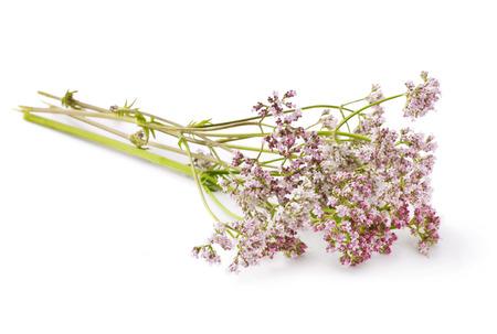 Herbal Medicine: Valerian